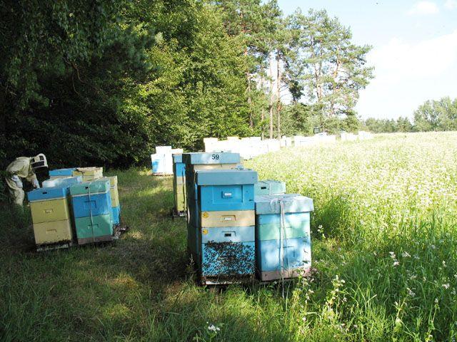 krolewskie-miody-pszczelarz